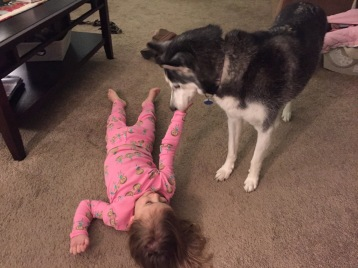 child with husky