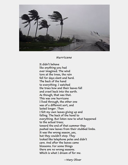 hurricane poem by mary oliver