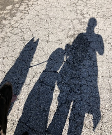 A shadow of a woman and two dogs